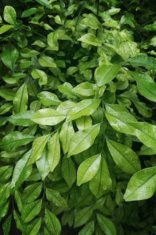緑の自然の葉の背景の束