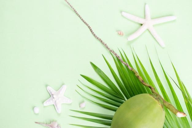 パステルグリーンの背景にヒトデとココナッツと緑の葉のヤシ。