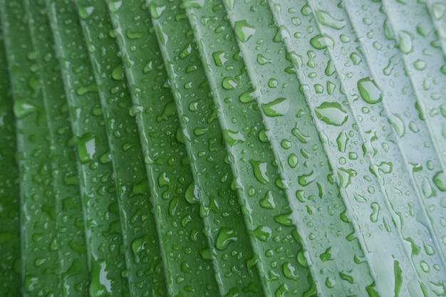 Зеленые пальмы листья в каплях после дождя. красивая текстура естественный фон.