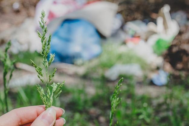 Женская рука держит траву, зеленый колосок, растение на фоне мусора в лесу