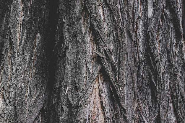 古い木の樹皮の質感、木のバルク構造の背景。