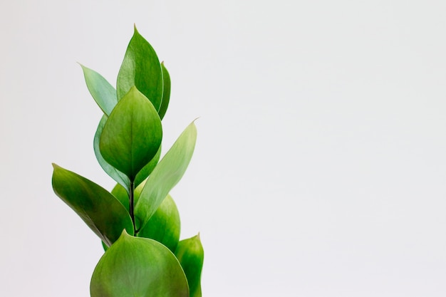 白地に緑の熱帯の葉。スタイリッシュでトレンディなミニマルな自然