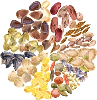 種子が分離されました。グルテンフリー製品、健康食品、植物性タンパク質、菜食。コーン。レンズ豆、杉、チア、アマランス