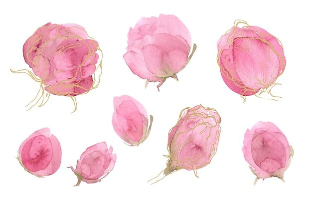 バラの春と夏の花のセット。牡丹