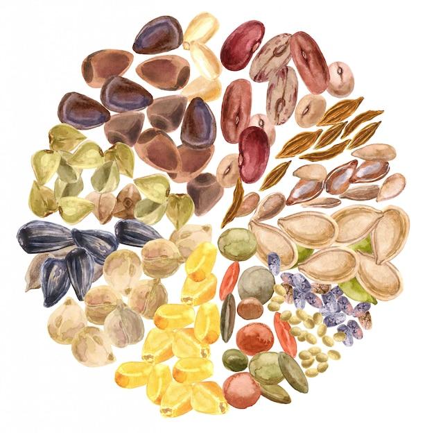 種子が分離されました。グルテンフリー製品、健康食品、植物性タンパク質、ベジタリアンダイエット