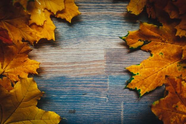 秋の鮮やかな葉の背景