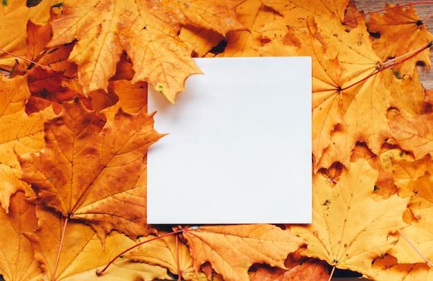 空白の白いカードと秋の明るい葉の背景