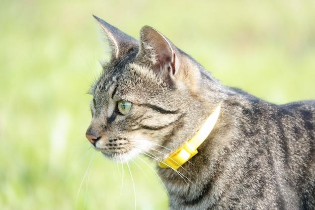草の中の狩りの猫。攻撃直前の猫