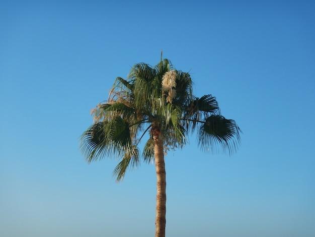 夏の青い空にヤシの木