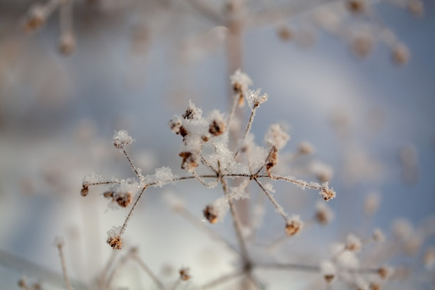 Зимний фон, утренний мороз на траве во льду