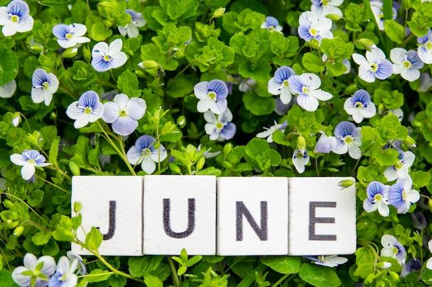 Деревянный алфавит июнь на фоне зеленой травы