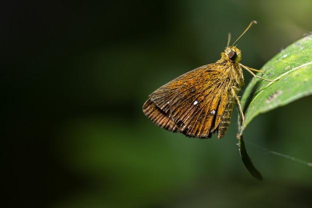 緑の葉に蝶