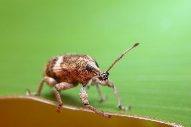 Макро-лиственный жук