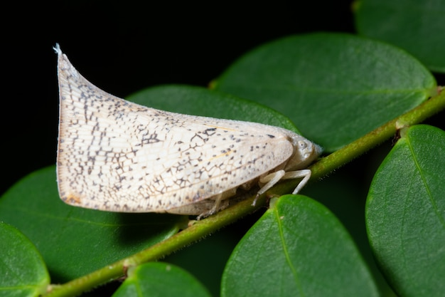 植物の白い昆虫
