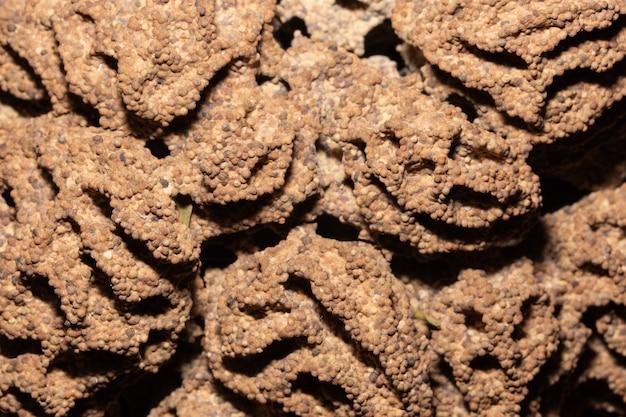 根の地面、シロアリの巣
