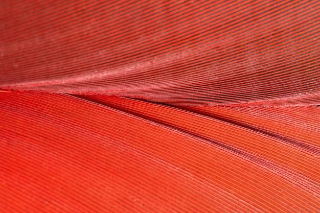 Поверхность пера
