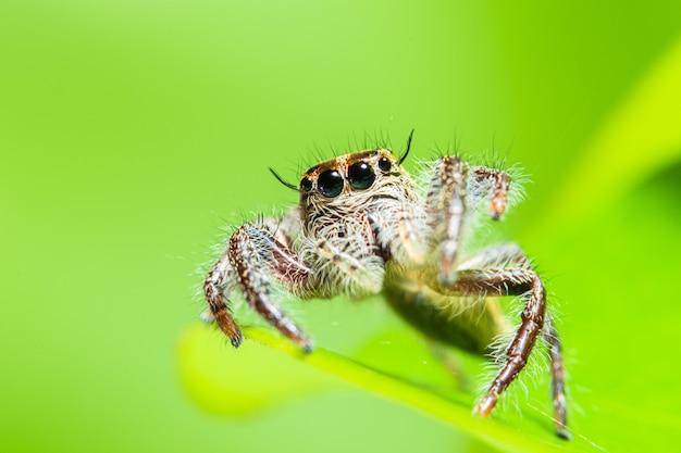 Макрос паук в природе зеленом фоне