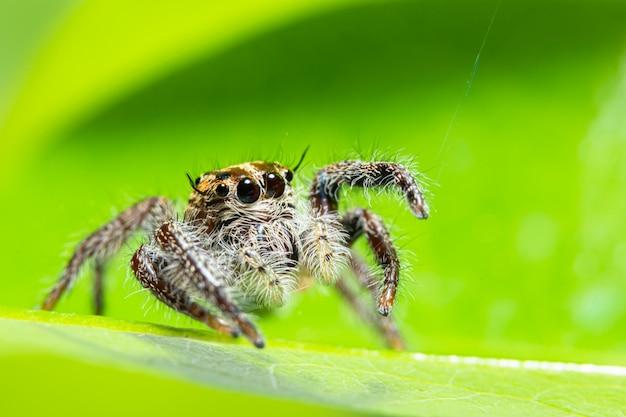 自然の緑の背景のマクロクモ