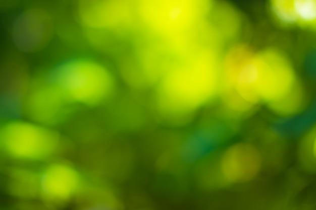 日光ボケ緑の木々の自然なぼやけ