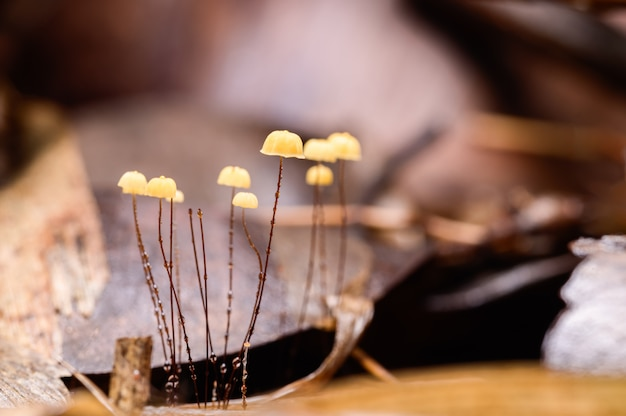 自然の森で育つキノコ