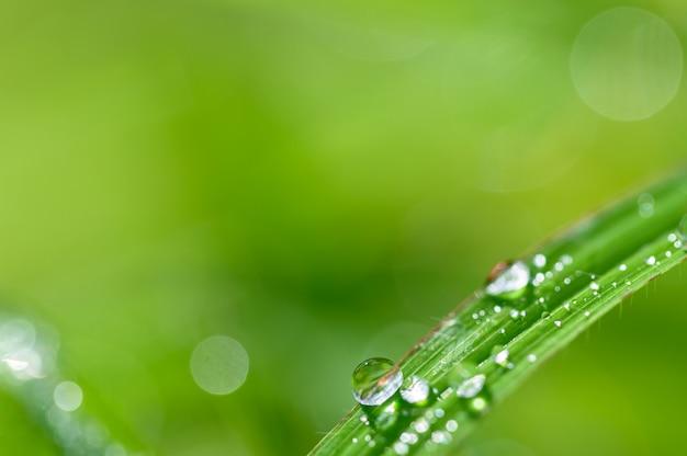 世界の緑の環境を愛するというコンセプト