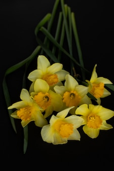 黒の背景に黄色の水仙の花束のクローズアップ