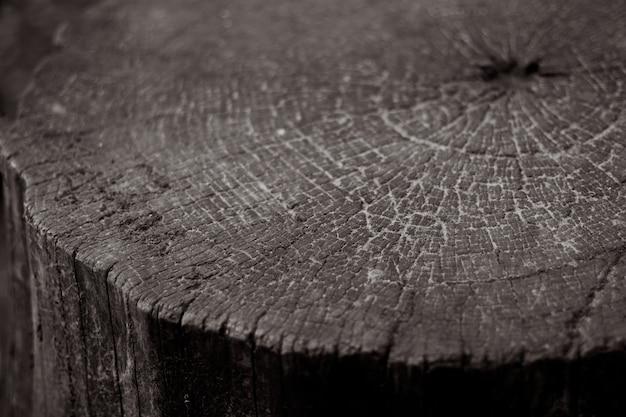 亀裂とリングとテクスチャの木製の木の切り株
