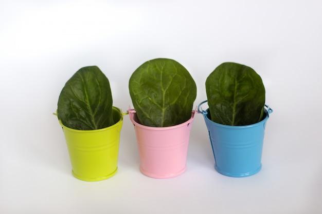 Зеленые, синие и розовые ведра с сочными зелеными листьями