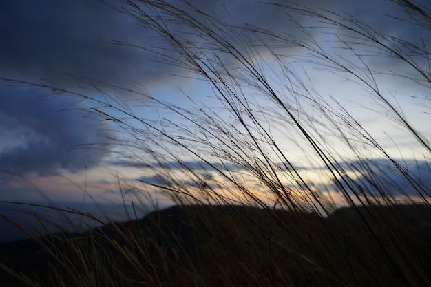 風になびく草の茎