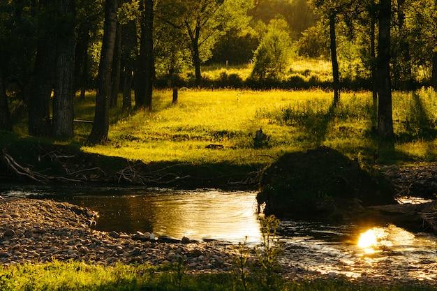 暖かい雨。川と森の魔法のイメージ。木々の間から太陽の光。