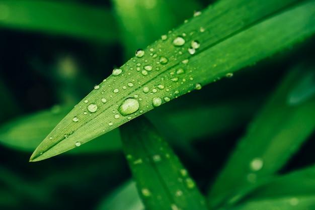 コピースペースを持つ露滴と美しい鮮やかな光沢のある緑の草が値下がりしました。