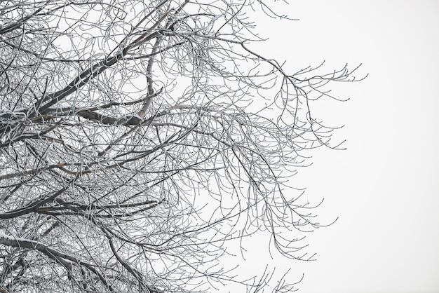 Замороженные ветви на белом небе