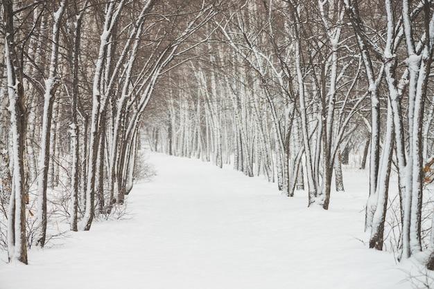 公園内の木の枝の間で雪のトンネル