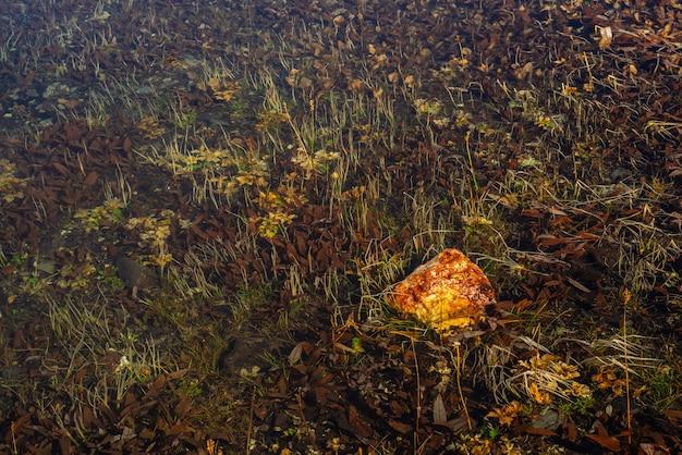 カラフルな植物と湖の底に大きな鮮やかな石