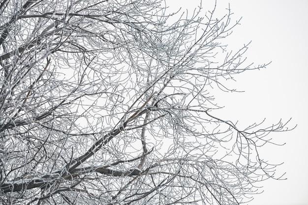 白い空を背景に冷凍の枝。