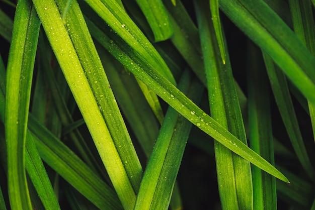 Натуральная яркая блестящая зеленая трава с каплями росы