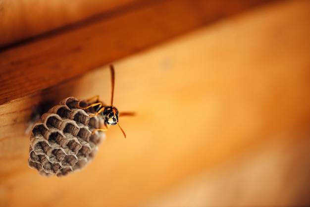 小さなハチはマクロで彼のハニカムを保護します。