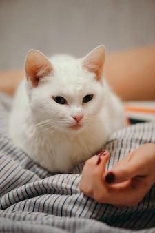 Белый кот лежит на кровати.
