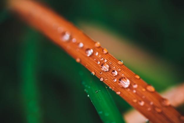 Красивая яркая сияющая зеленая и покрасневшая трава с концом-вверх падений росы с космосом экземпляра. чистая, приятная, приятная зелень. капли дождя в макросе. предпосылка от зеленых красных текстурированных заводов в погоде дождя.