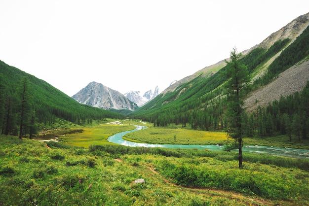 雪山に対する谷の蛇行形状の山川。氷河に対する小川の水の流れ。豊かな植生と高地の森。雄大な自然の素晴らしい大気の風景。