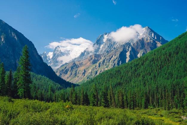 森林の近くの草原。針葉樹林の丘の後ろに雪の岩の尾根。青い空の下で巨大な雪に覆われた山脈の上の雲。ジャイアントロック。高地の自然の大気の風景。