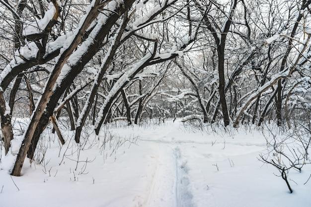 Снежный туннель среди ветвей деревьев в парковой зоне крупным планом. белоснежная с аллеи в роще. путь среди зимних деревьев с инеем во время снегопада. падение снега. атмосферный зимний пейзаж.
