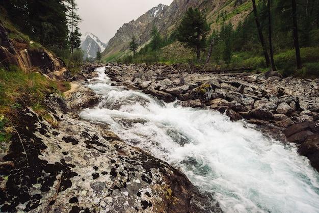 大きな湿った石のある野生の山の小川の氷河からの素晴らしい速い水の流れ。森と雪山の素晴らしい景色。高地の大気の風景。