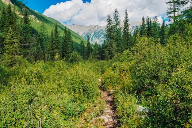 野生の植生高地の小道。丘から山への経路。豊かな自然の素晴らしい山の風景。茂みの中のパス。針葉樹林に覆われた素晴らしい山並み。