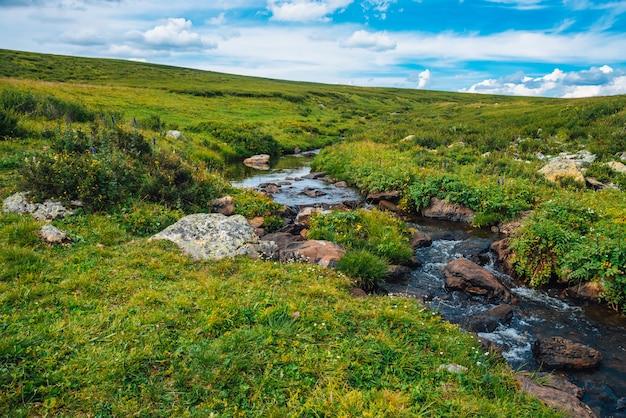 晴れた日の緑の谷の春の水の流れ。豊かな高地の植物。マウンテンクリーク近くの素晴らしい山岳植生。素晴らしい楽園の風光明媚な風景。パラディシアの日当たりの良い絵のような風景。