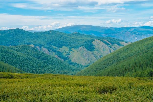曇りの青い空の下で森林を覆う草原の巨大な山々からの壮大な眺め。素晴らしい野生の森の風景。高地の自然の大気の風景。風光明媚なミニマリストの山並み。
