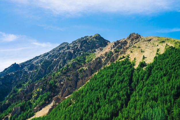 晴れた日の斜面に針葉樹林の巨大な岩。日光の下で山腹の針葉樹のてっぺんのテクスチャ。急な岩の崖。雄大な自然の鮮やかな山の風景。谷からの眺め。