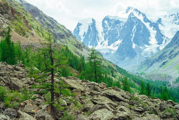 巨大な山々の背後にある素晴らしい氷河をご覧ください。巨大な驚くべき雪山。石の針葉樹。山腹の針葉樹林。高地の雄大な自然の大気の風景。