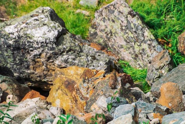 高地の石の上のピカげっ歯類。カラフルな岩が多い丘の上の小さな好奇心が強い動物。山の中の絵のような岩の上のふわふわかわいい哺乳類。大きな耳を持つ小さなマウス。少し軽快なナキウサギ。