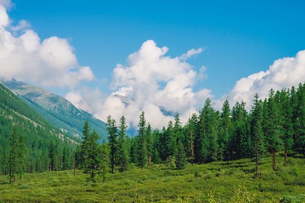 Красивое огромное облако на гигантских горах за хвойным лесом на холме под голубым небом.